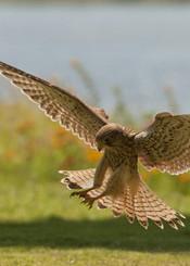 Bird landing near the lake